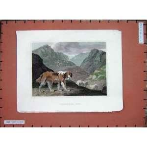 Colour Antique Print Shepherds Dog Sheep Mountains: Home