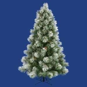 9 x 65 Scotch Pine Christmas Tree 550 Dura Lit Clear