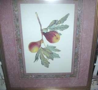 Vintage GOLD Wood Framed w Glass PEARS BOTANICAL Print