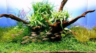 JAVA FERN x 3+1 FREE   live aquarium plant moss anubias