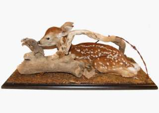 Full Body Mount Whitetail Deer Spotted Fawn Taxidermy Stuffed Baby