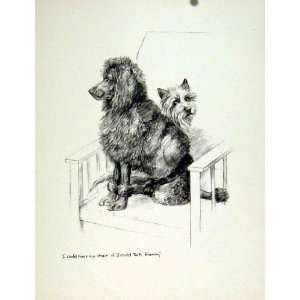 Dog Curtain Playful Animal Pet Home Pencil Sketch Draw: Home & Kitchen