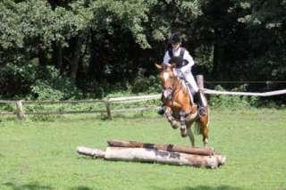 Reitunterricht für Jung und Alt in Hamburg   Bergedorf  Pferde