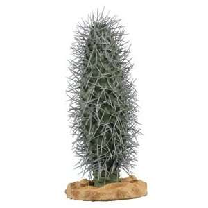 Madagascar Palm Cactus 10 Plant Patio, Lawn & Garden